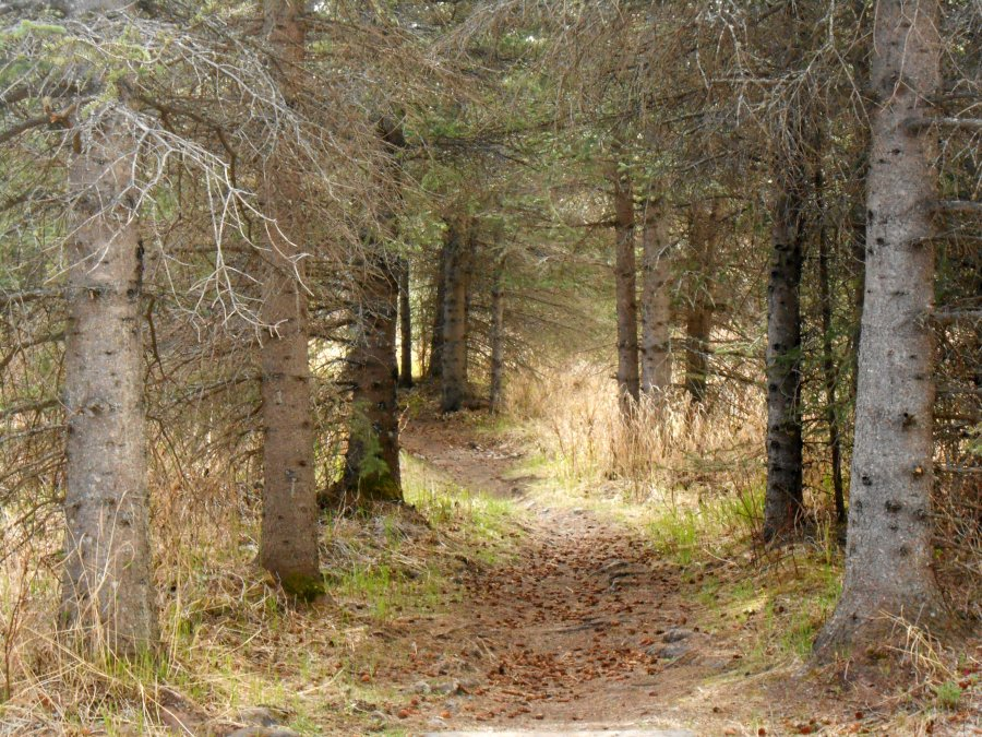 black bear trail